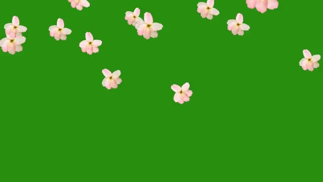 Watch and share Flower Fall Green Screen Free Hd GIFs on Gfycat