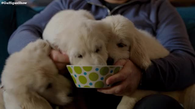 Watch this puppies GIF on Gfycat. Discover more puppies GIFs on Gfycat