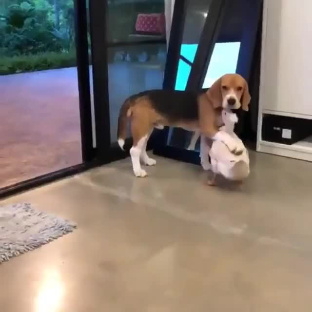 Watch and share Interspecies Friendship's Are The Best GIFs by b12ftw on Gfycat