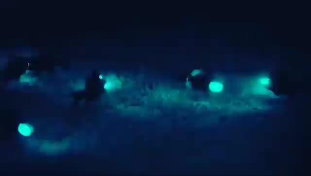 nature, Flashlight fish GIFs