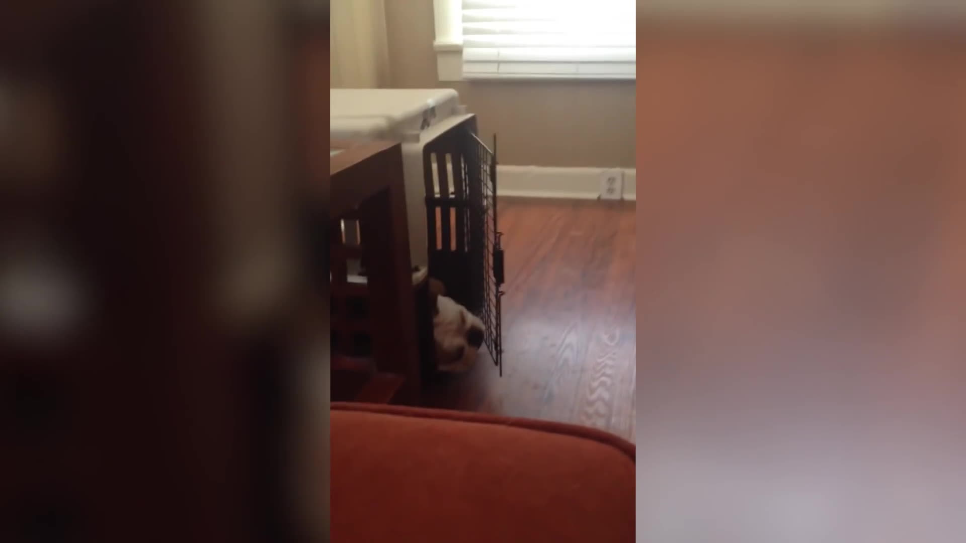 funny videos, gifs, stoppedworking, Try Not To Laugh At This Funny Dog Video Compilation | Funny Pet Videos GIFs