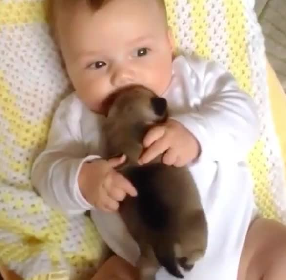 Watch this baby GIF by GIF Queen (@ioanna) on Gfycat. Discover more aww, awww, baby, bffs, cute, cute baby, forever, kid, little baby, love, newborn, puppy GIFs on Gfycat