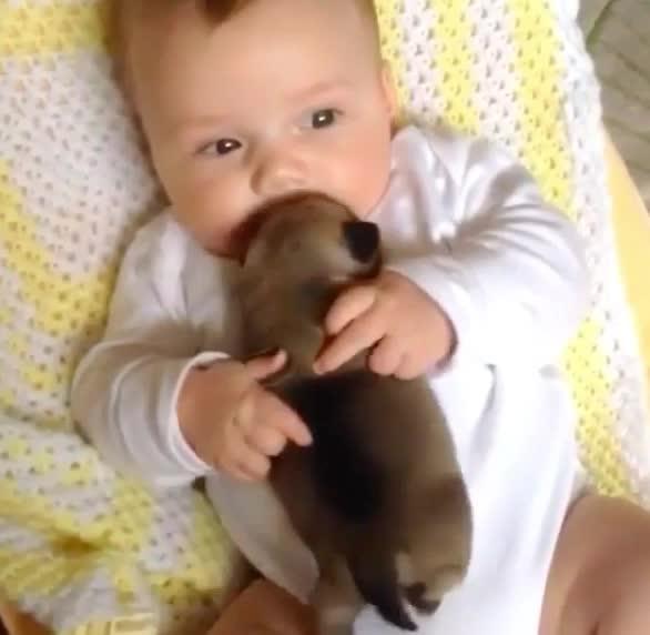 aww, baby, bffs, cute, forever, love, puppy, Awww GIFs