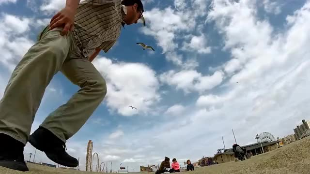 Watch Funny animals steal GoPro GIF by Bob (@bobsagetsbaguettes) on Gfycat. Discover more GoPro, People, animals, crook, filch, nip, pets, rustle, snatch, steal GIFs on Gfycat