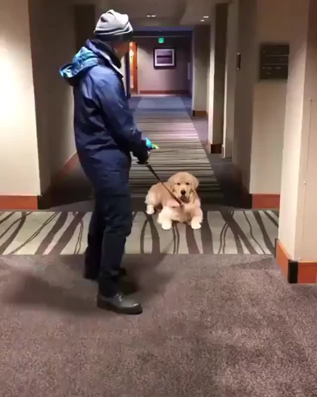 Watch No, please! Just a couple more walkies! GIF on Gfycat. Discover more related GIFs on Gfycat