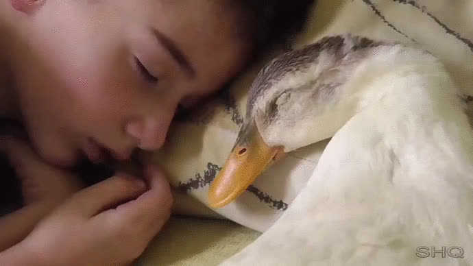 animalgifs, aww_gifs, Duck feathers are the best GIFs