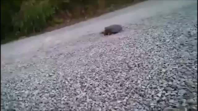Watch Turtle GIF by @marsey on Gfycat. Discover more related GIFs on Gfycat