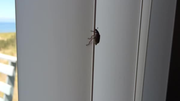 awwnverts, Cute beetle climbing vertical blinds (reddit) GIFs