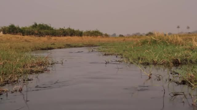 Watch and share Crocodile GIFs and Okavango GIFs on Gfycat