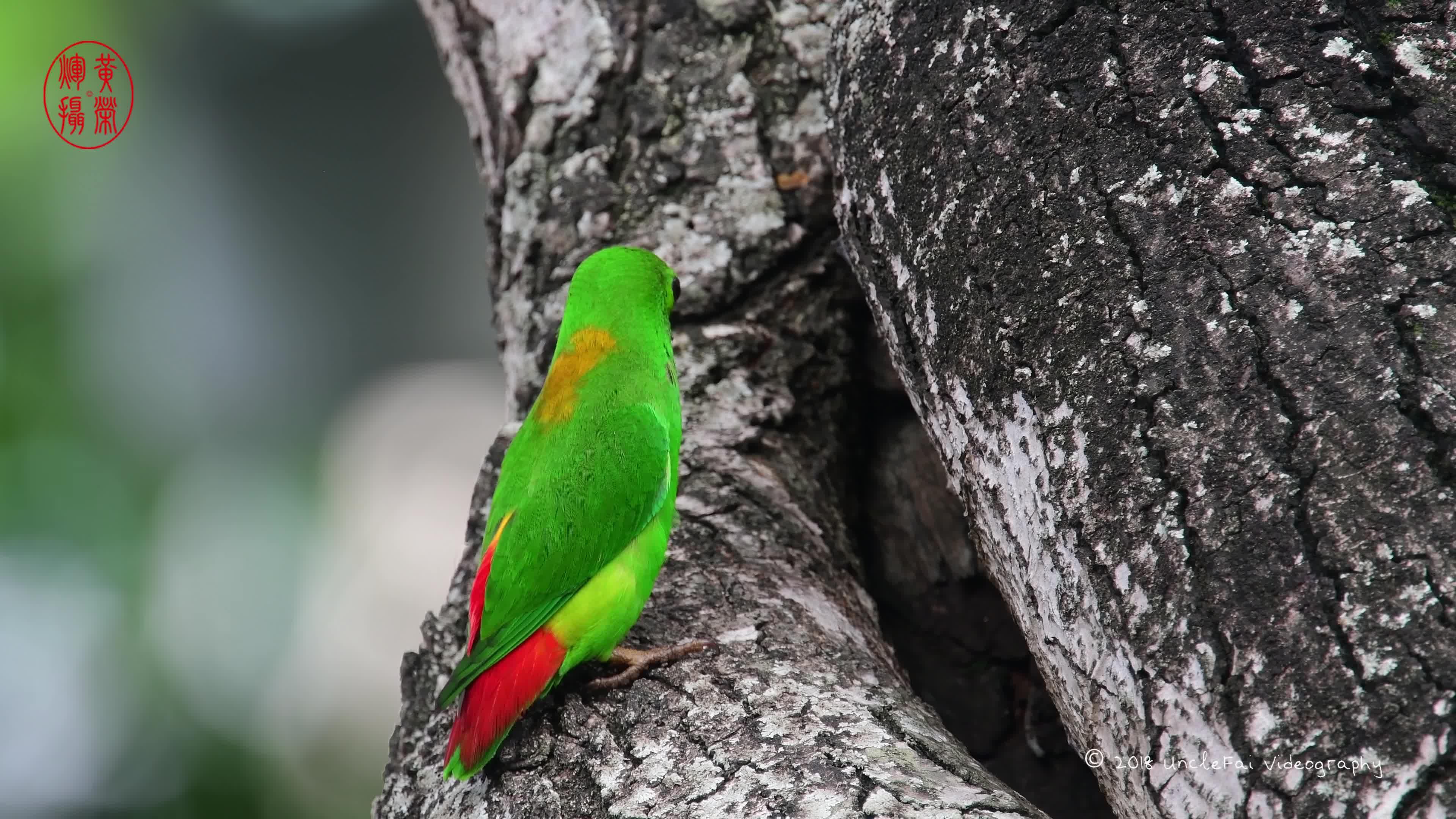 papug GIFs