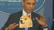 Watch Doge GIF on Gfycat. Discover more related GIFs on Gfycat