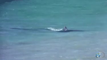 Watch and share Discovery Channel GIFs and Shark Week 2013 GIFs on Gfycat