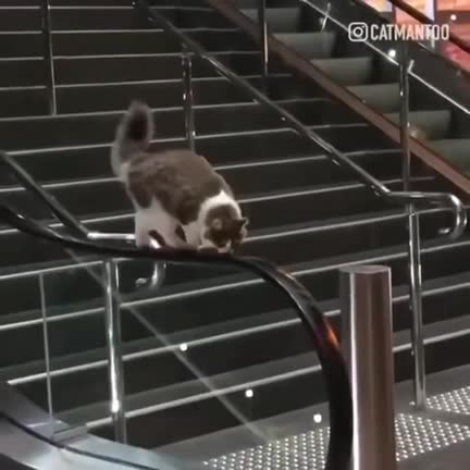 Watch and share Catwalk GIFs by caiserzero on Gfycat