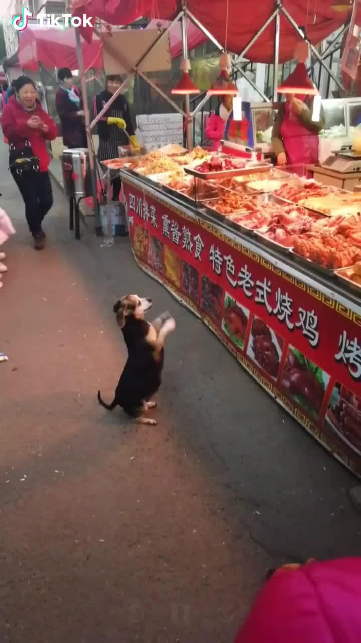 A hungry dog GIFs