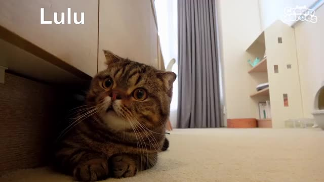 Watch and share Kitten GIFs and Kucing GIFs by thedogdidit on Gfycat