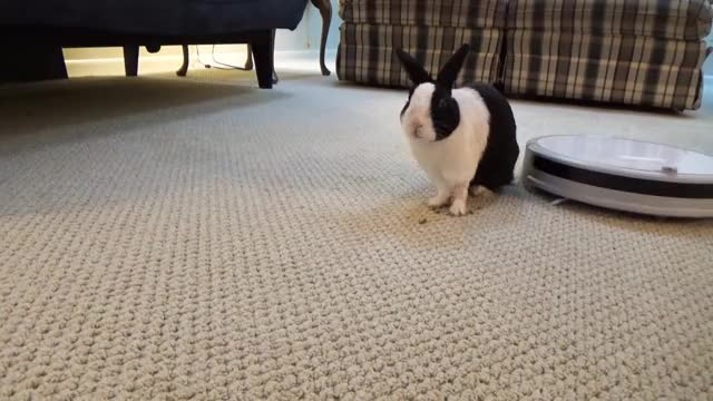 Watch and share Rabbit Eating Asmr GIFs and Rabbit Watermelon GIFs on Gfycat