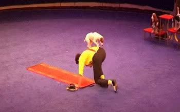 Watch and share Circus GIFs on Gfycat