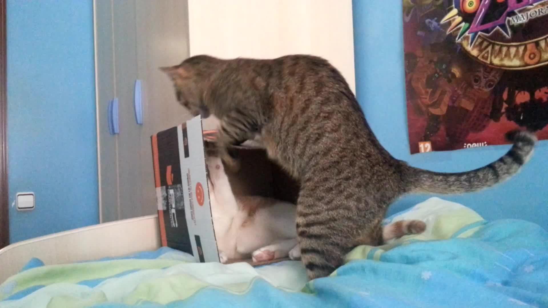 cat box battle royale GIFs