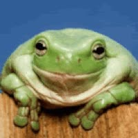 Watch and share Animated Frog With Big Cheesy Smile GIFs on Gfycat