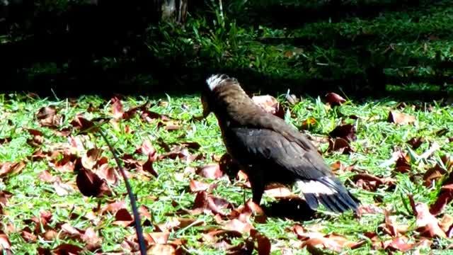 Watch and share Malaysian Birds GIFs by likkaon on Gfycat