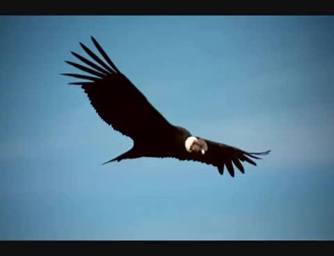 Watch and share El Condor Pasa - PERU GIFs on Gfycat