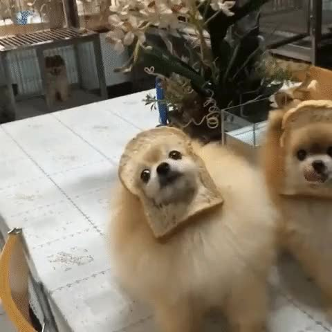 Watch and share Puppy Fails GIFs on Gfycat