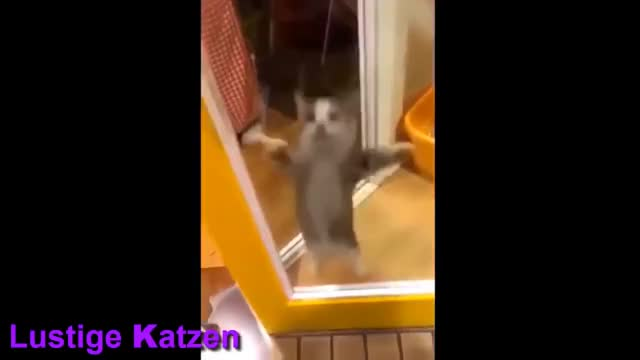 Watch this trending GIF on Gfycat. Discover more animalvideos, fun, funny, lustig GIFs on Gfycat