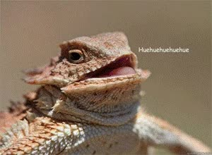 Watch hue hue hue lizard GIF on Gfycat. Discover more related GIFs on Gfycat