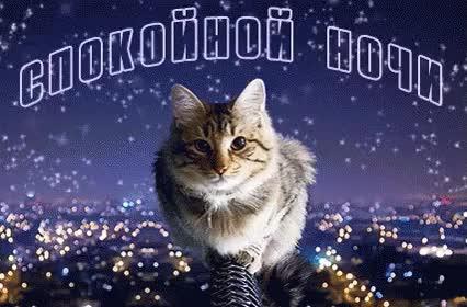 Watch and share Спокойной Ночи Спать Пока Сон Устал Сплю GIFs on Gfycat