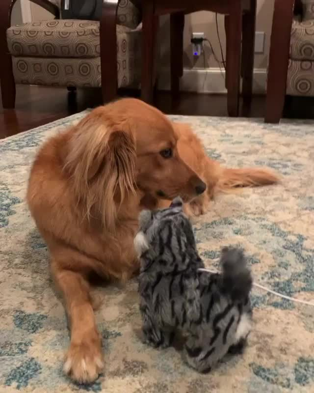 Watch and share Dogsofinsta GIFs and Videoofdogs GIFs by Julia Khoang on Gfycat