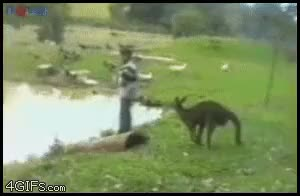 Watch australia GIF on Gfycat. Discover more peoplebeingjerks GIFs on Gfycat