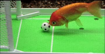 Watch and share Football GIFs by notlydia on Gfycat
