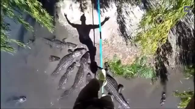 Watch and share Slackline Walking Over Hungry Gators GIFs by b1-66er on Gfycat