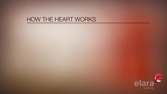 Watch How The Heart Works 3D Animation HD GIF by @crinker on Gfycat. Discover more 3d Animation, Animation, Beating Heart, Blood Flow, Elara, Elara Systems, Heart, Pumping Heart, Video Production, how the heart works GIFs on Gfycat