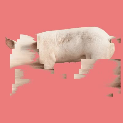 Watch and share Blackmirror GIFs and Pig GIFs by Applied Works on Gfycat