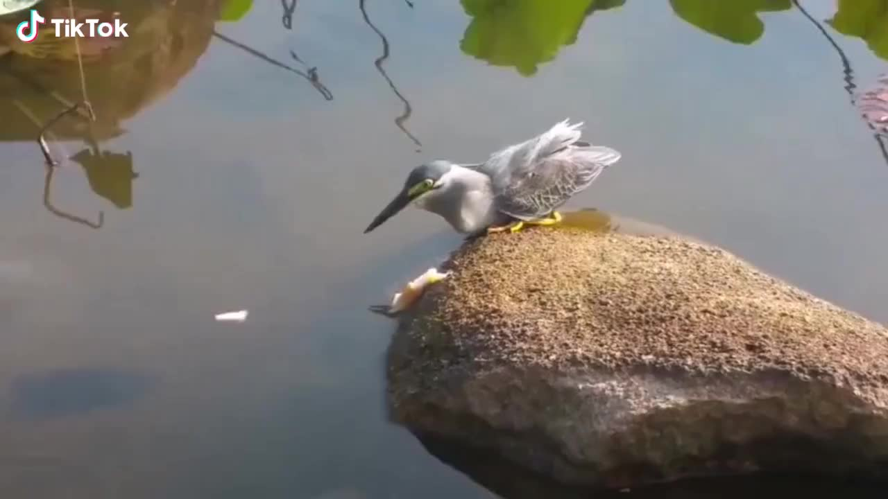 They also do fishing GIFs