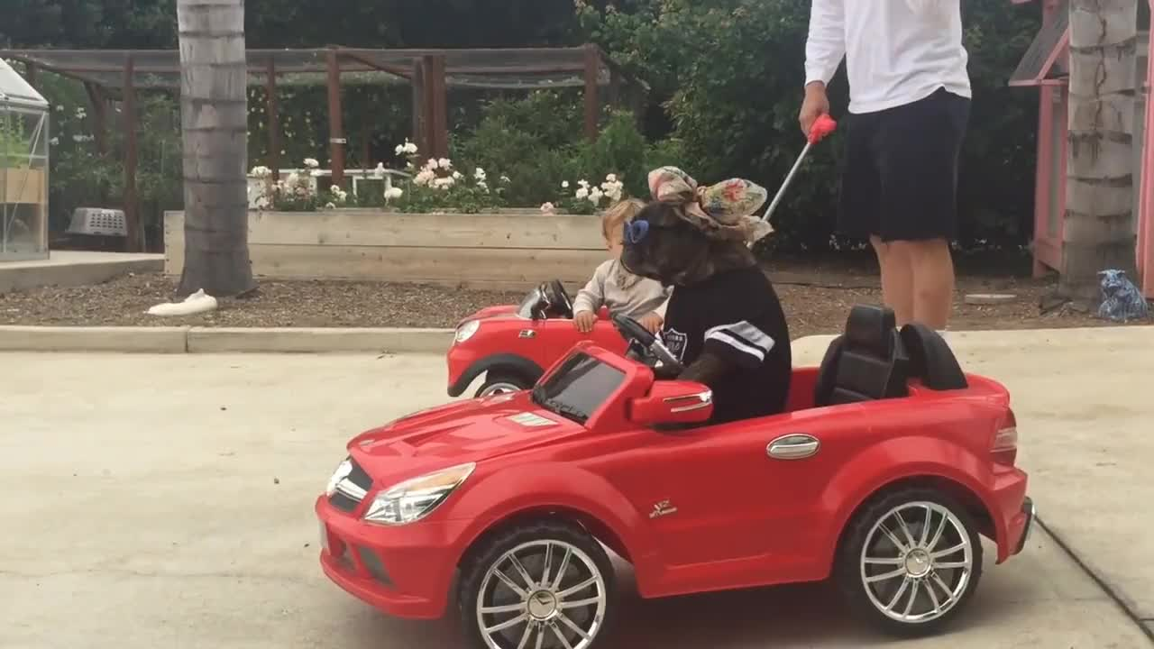 car, convertable, convertible, dog, frenchie, mercedes, pam, pamlovesferrariboys, sammy, about pam GIFs