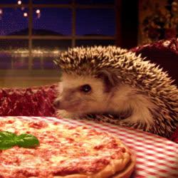 animal, animals, hedgehog, hedgehog gif.gif GIFs
