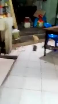 Watch and share Briga De Ratos Gato Nao Mete A Colher GIFs by joparebr on Gfycat