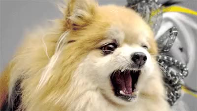 Watch and share Angry Dogs In Cute Costumes GIFs on Gfycat