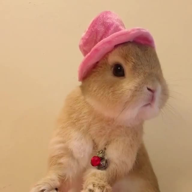 Watch and share Bunnylover GIFs and Bunstagram GIFs on Gfycat
