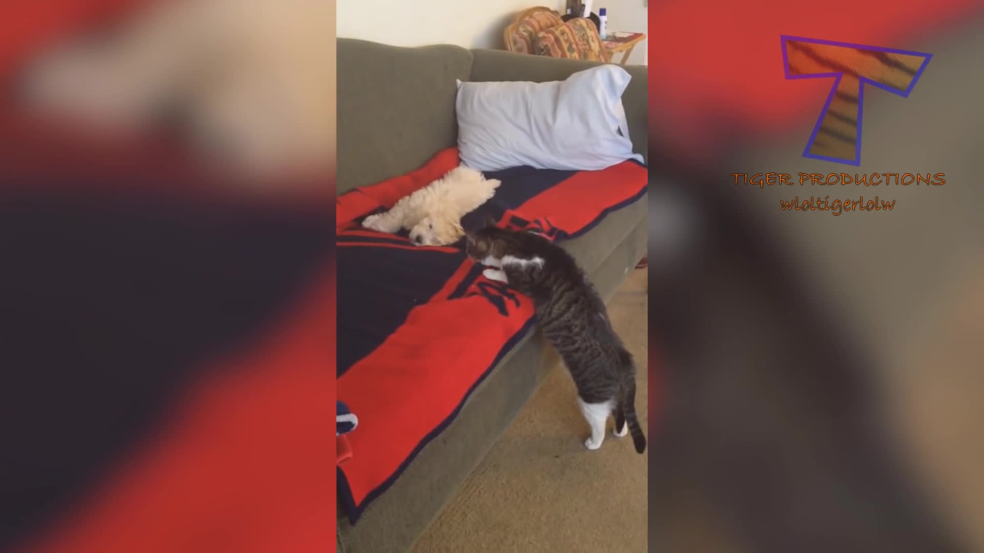 cats vs dogs, cattaps, dog cat battle, IF YOU LAUGH YOU LOSE CHALLENGE - Cats & Dogs - Who is the funniest to you? GIFs