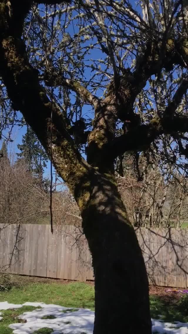Watch Squirrel GIF by @izmar0 on Gfycat. Discover more aww, cute, dog, squirrel, tree GIFs on Gfycat