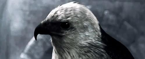 Watch and share Assassin's Creed Ii GIFs and Ac Brotherhood GIFs on Gfycat
