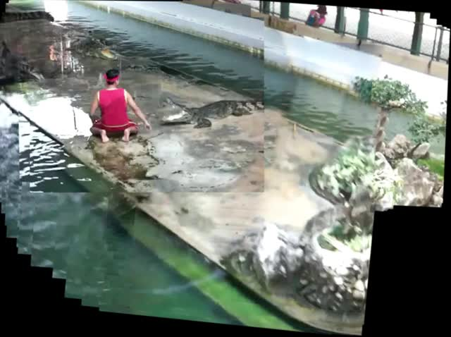 Watch and share Accident In Crocodile Show. GIFs by kyoshi on Gfycat