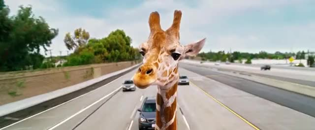 Watch Hangover 3 Allan Giraffe GIF on Gfycat. Discover more related GIFs on Gfycat