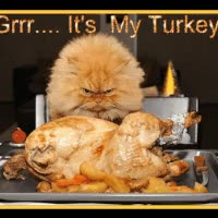Watch Thanksgiving GIF on Gfycat. Discover more related GIFs on Gfycat
