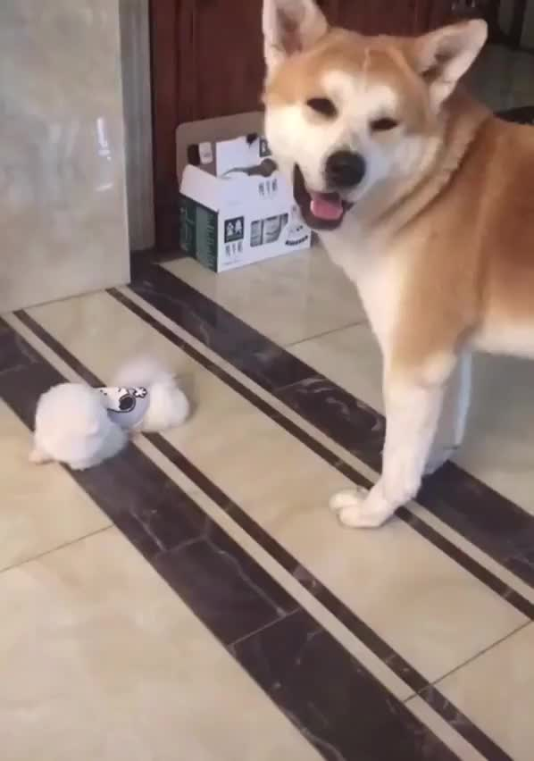 Watch puppy GIF by podizzle3000 on Gfycat. Discover more related GIFs on Gfycat