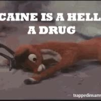 Watch cocaine GIF on Gfycat. Discover more related GIFs on Gfycat