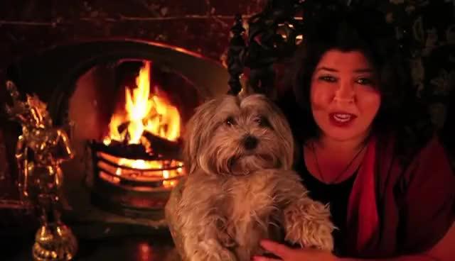 Watch Kiki the astrology dog GIF on Gfycat. Discover more astrology, dog, psychic GIFs on Gfycat